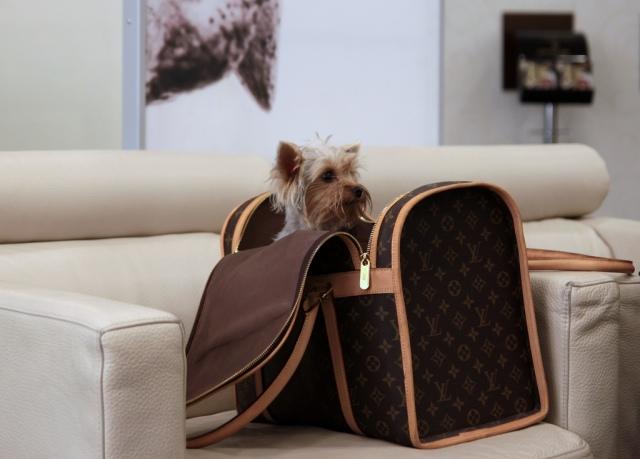 Viajando con tu mascota